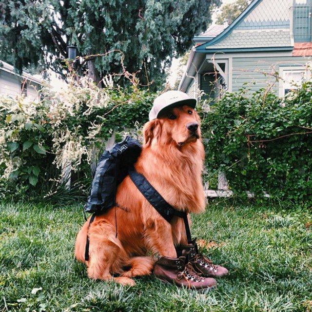 Aventurile epice ale lui Aspen, retrieverul hoinar - Poza 16