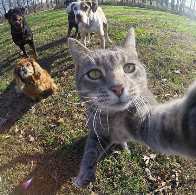Manny, pisica zurlie care-si face selfie-uri - Poza 1