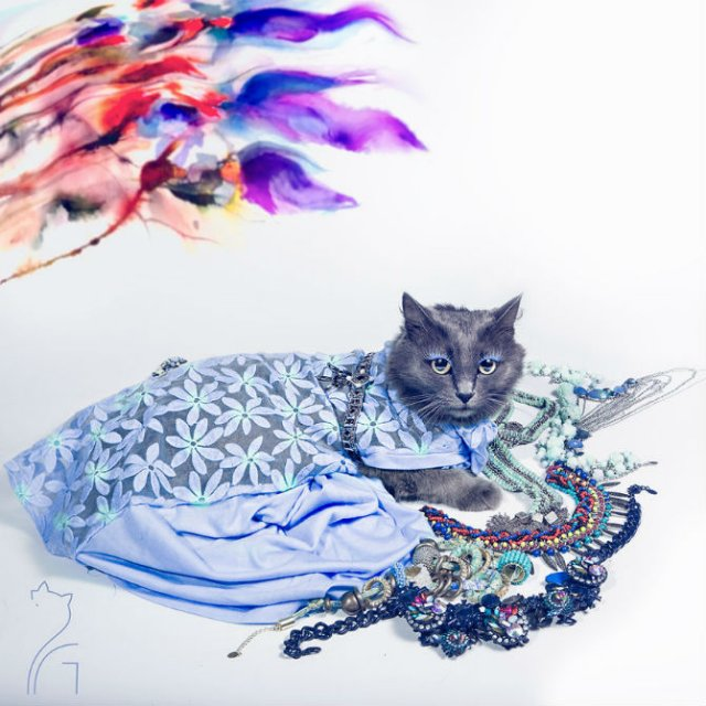 Cea mai cocheta pisica, in poze de colectie - Poza 10