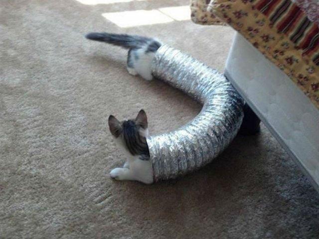 Altfel de poze cu pisici, in ipostaze haioase - Poza 1