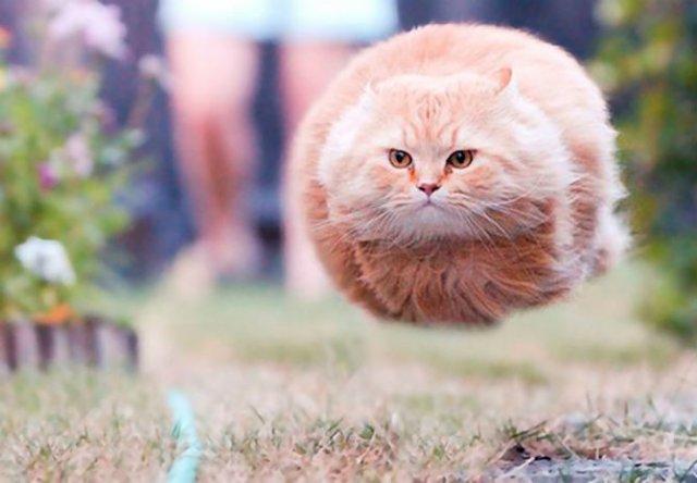 Altfel de poze cu pisici, in ipostaze haioase - Poza 3