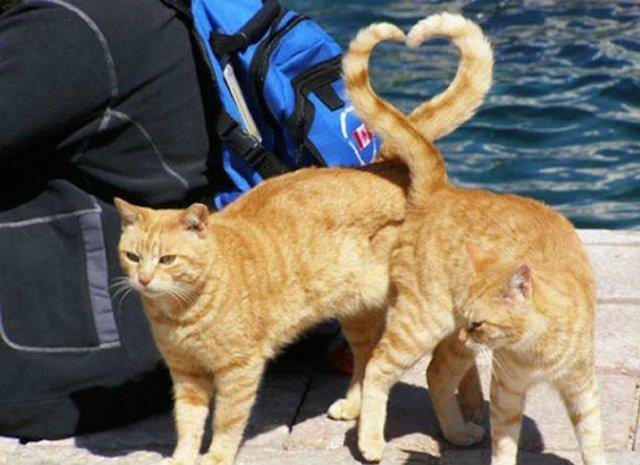 Altfel de poze cu pisici, in ipostaze haioase - Poza 4