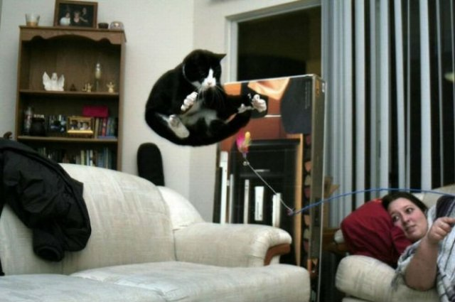 Pisici zburatoare