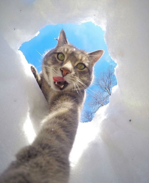 Manny, pisica zurlie care-si face selfie-uri - Poza 6