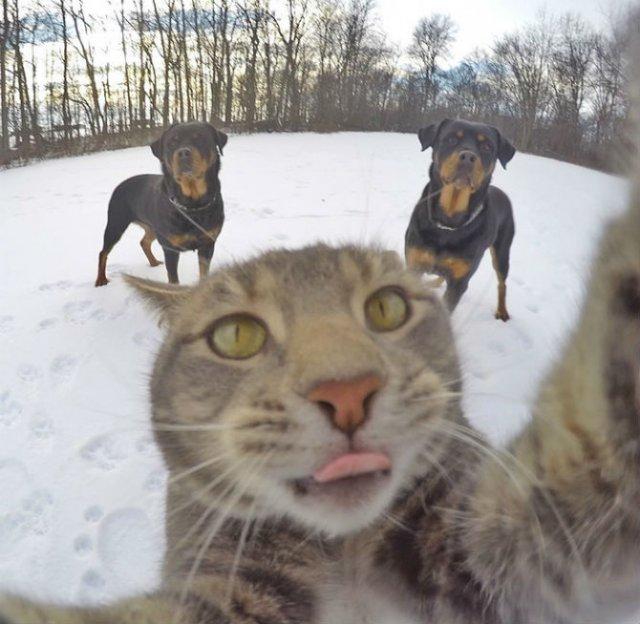Manny, pisica zurlie care-si face selfie-uri - Poza 7