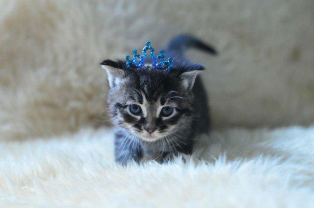 13 Pisicute care iti vor insenina ziua - Poza 13
