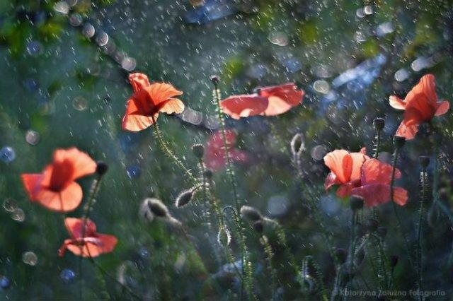 Florile ochilor mei: Picturi din sanul naturii - Poza 17