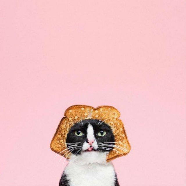 Cheeto, o pisica haioasa, intr-un pictorial trasnit - Poza 7