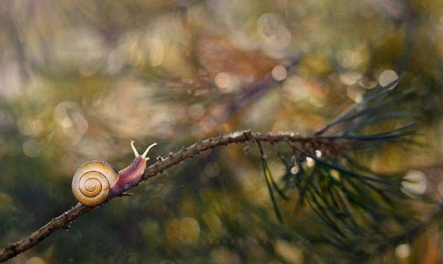 Lumea magica a melcilor, in poze superbe - Poza 10