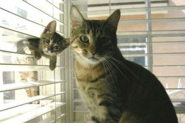 20+ Poze amuzante cu pisici naravase - Poza 14