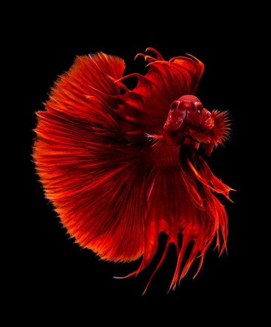 Portrete spectaculoase cu pesti de acvariu - Poza 3