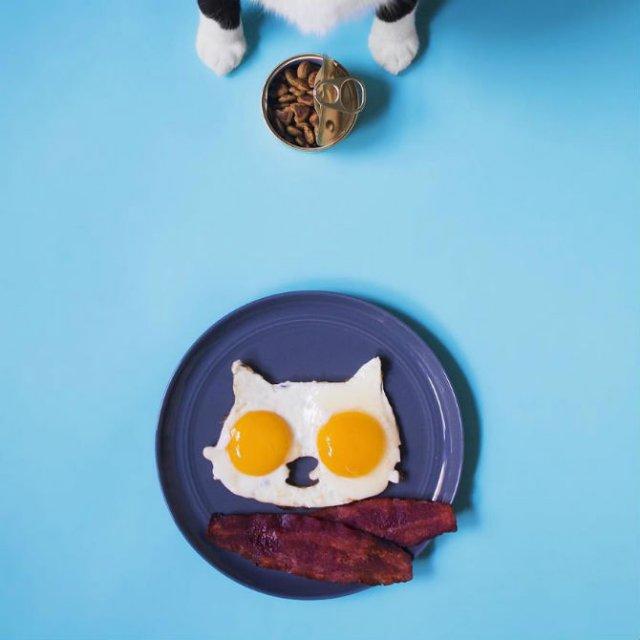 Cheeto, o pisica haioasa, intr-un pictorial trasnit - Poza 6