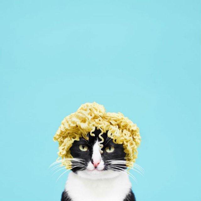Cheeto, o pisica haioasa, intr-un pictorial trasnit - Poza 1