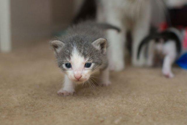 Cei mai simpatici pui de pisica, in cautare de stapan - Poza 12
