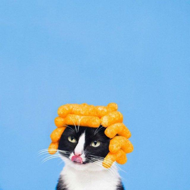 Cheeto, o pisica haioasa, intr-un pictorial trasnit - Poza 5