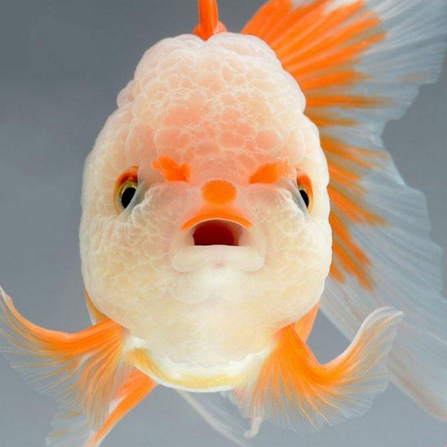 Portrete spectaculoase cu pesti de acvariu - Poza 1