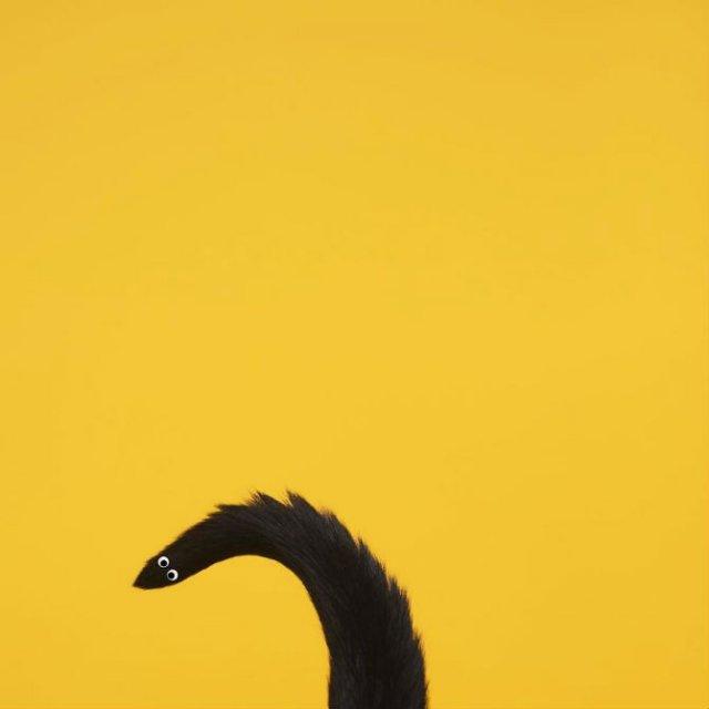 Cheeto, o pisica haioasa, intr-un pictorial trasnit - Poza 2