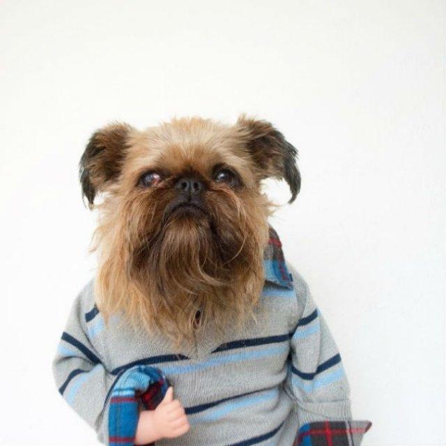 Cei mai haiosi caini cocheti, in poze cu stil - Poza 3
