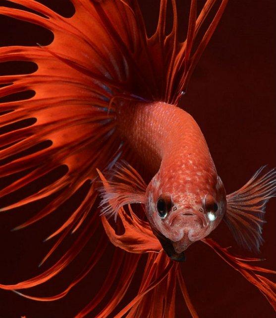 Portrete spectaculoase cu pesti de acvariu - Poza 6