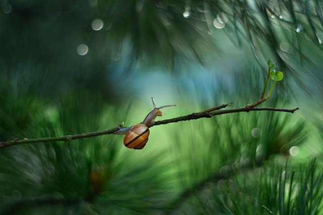 Lumea magica a melcilor, in poze superbe - Poza 9