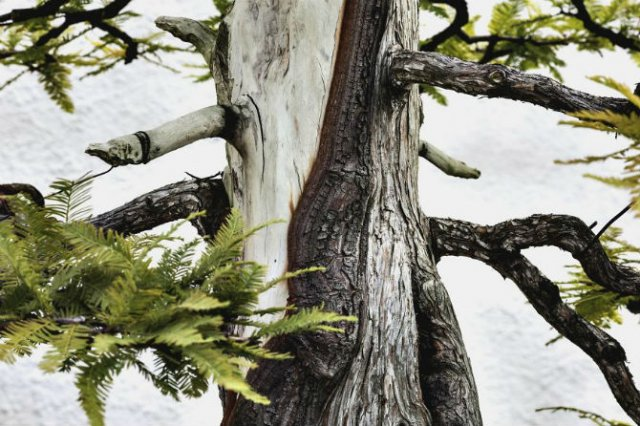Unicitatea bonsailor, intr-un pictorial superb - Poza 13