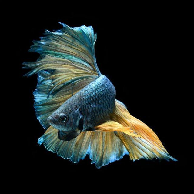 Portrete spectaculoase cu pesti de acvariu - Poza 2