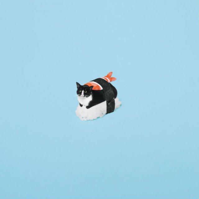 Cheeto, o pisica haioasa, intr-un pictorial trasnit - Poza 4