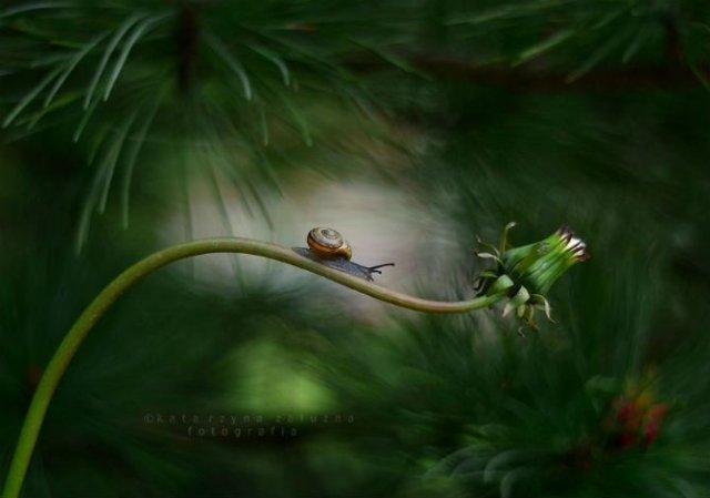 Lumea magica a melcilor, in poze superbe - Poza 3