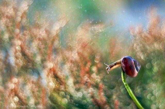 Lumea magica a melcilor, in poze superbe - Poza 8
