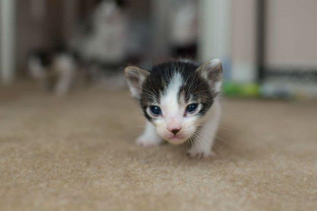 Cei mai simpatici pui de pisica, in cautare de stapan - Poza 11