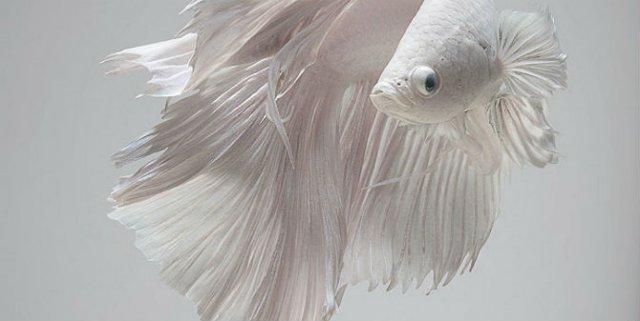 Portrete spectaculoase cu pesti de acvariu - Poza 4