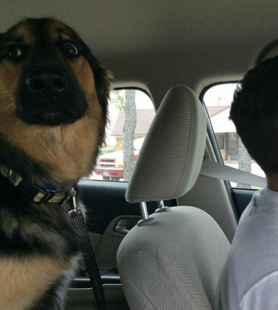 Reactii amuzante ale animalelor, la doctor - Poza 10