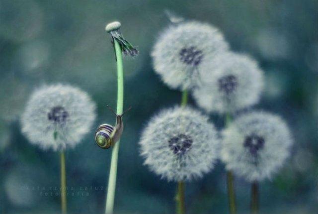 Lumea magica a melcilor, in poze superbe - Poza 7