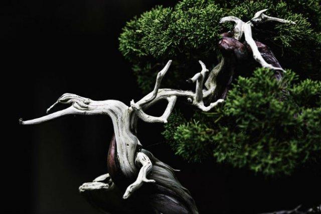 Unicitatea bonsailor, intr-un pictorial superb - Poza 12