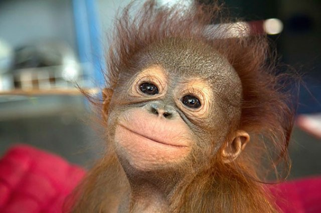 Cele mai simpatice animale zambarete - Poza 15