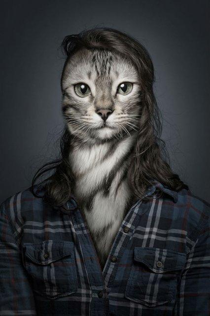 Pisici cu trasaturi umane, in poze haioase