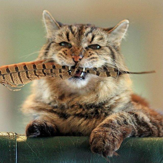 Corduroy, cea mai in varsta pisica din lume - Poza 11