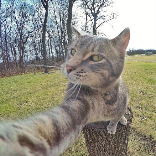 Manny, pisica zurlie care-si face selfie-uri - Poza 2