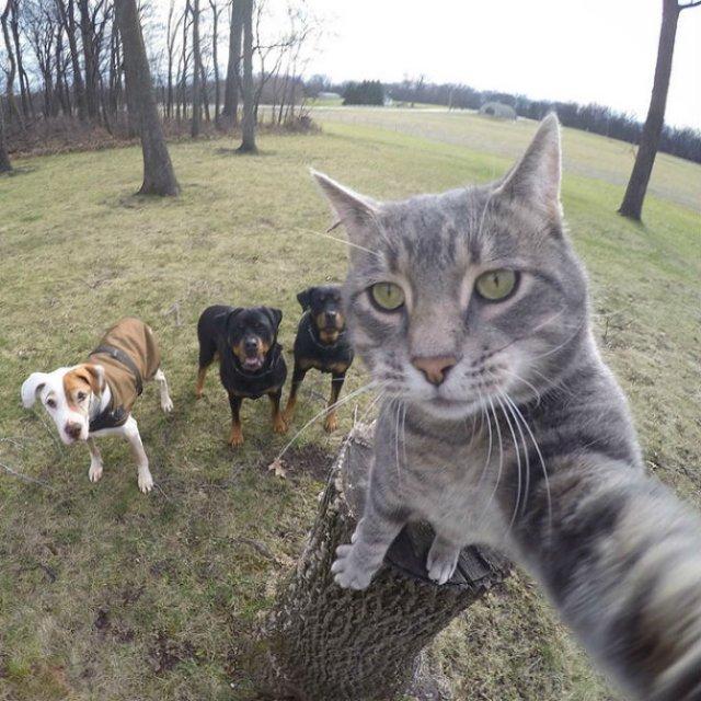 Manny, pisica zurlie care-si face selfie-uri - Poza 3