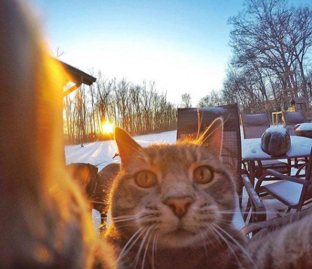 Manny, pisica zurlie care-si face selfie-uri - Poza 4