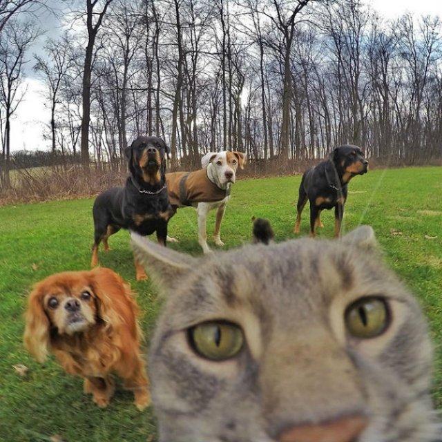 Manny, pisica zurlie care-si face selfie-uri - Poza 5