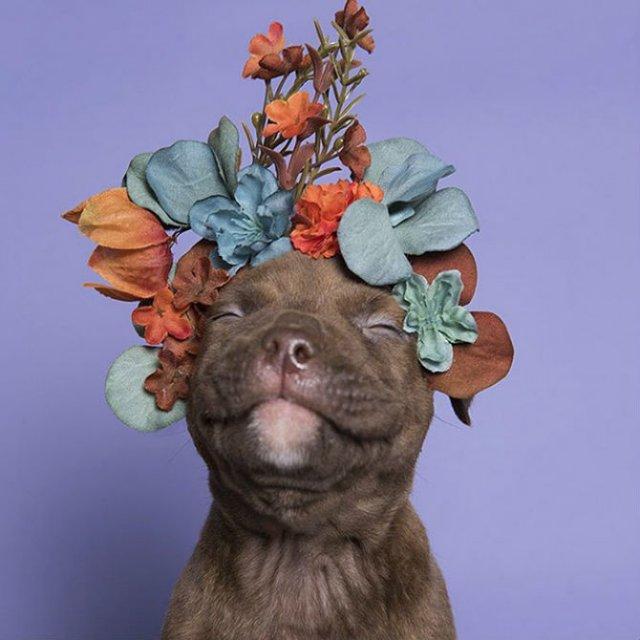 Pit Bull Flower Power: Ipostazele gingase ale cainilor de temut - Poza 6