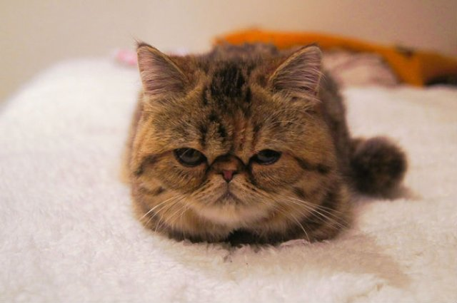 13 Pisicute care iti vor insenina ziua - Poza 12