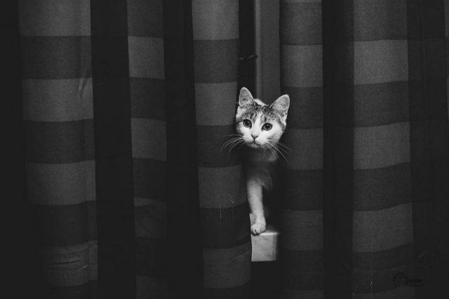Pisici in alb si negru: Cel mai vibrant pictorial cenusiu cu feline - Poza 3