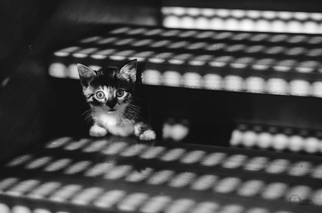 Pisici in alb si negru: Cel mai vibrant pictorial cenusiu cu feline - Poza 4