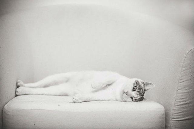 Pisici in alb si negru: Cel mai vibrant pictorial cenusiu cu feline - Poza 5