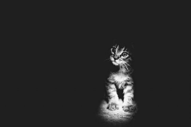 Pisici in alb si negru: Cel mai vibrant pictorial cenusiu cu feline - Poza 6