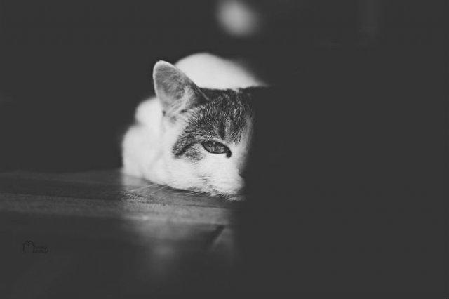 Pisici in alb si negru: Cel mai vibrant pictorial cenusiu cu feline - Poza 7