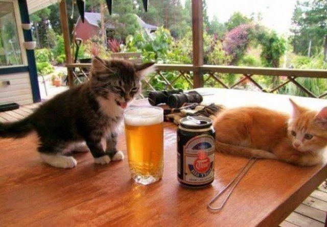 20+ Poze amuzante cu pisici naravase - Poza 13