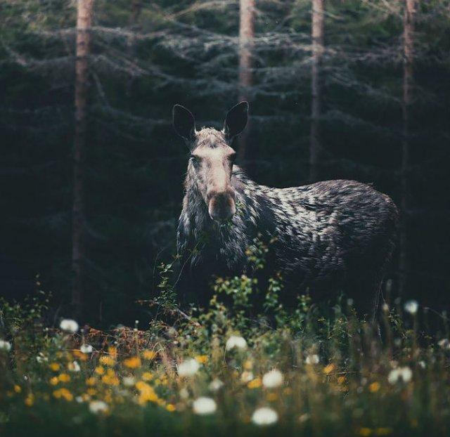 Sufletul padurii, intr-un pictorial deosebit - Poza 14